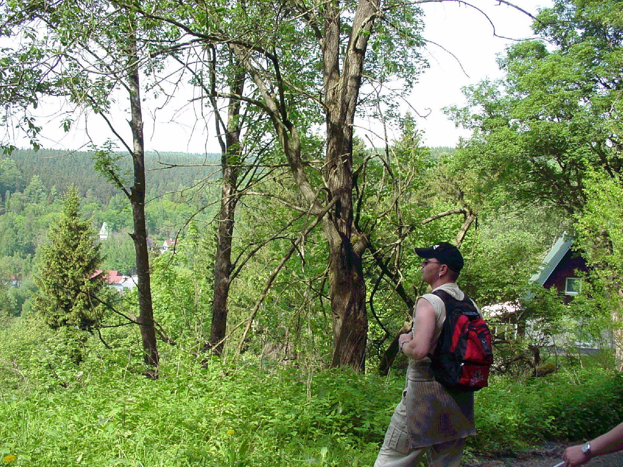 Wanderung zur Talsperre Rauschenbach
