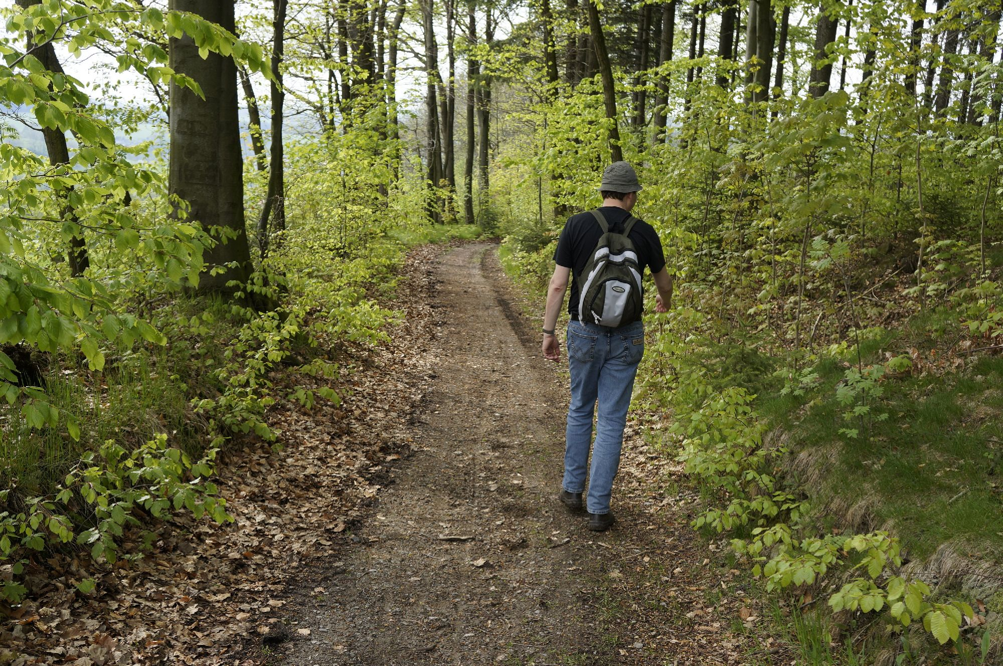 Waldwege auf der Burgbergwanderung
