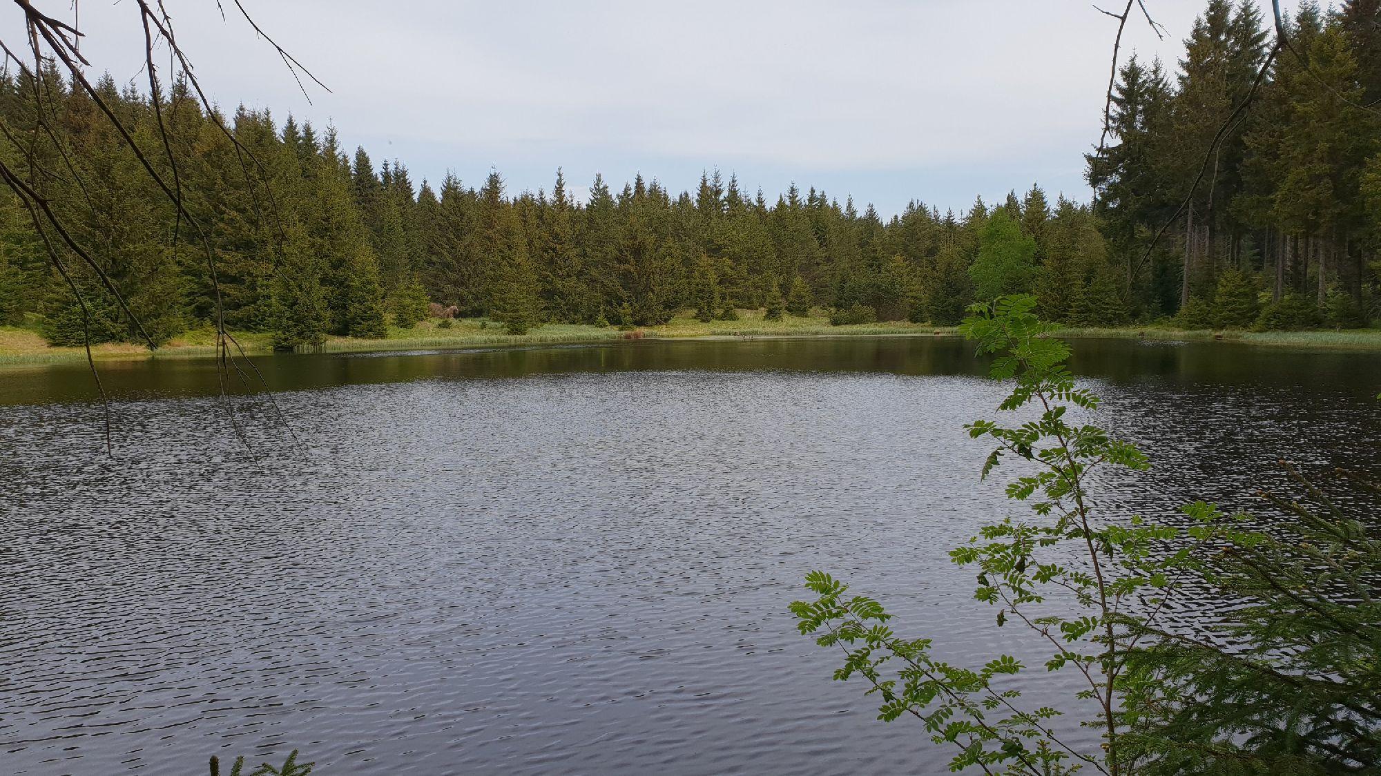 Ullersdorfer Teich zur Männertagswanderung