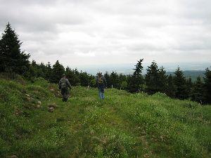 Über Waldwege zum Beerhübel