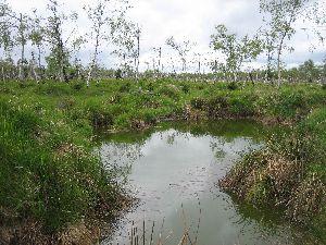 Sumpf auf dem Weg zum Beerhuebel