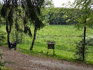 Bärenbachtalweg mit Blick auf Ornamentpflanzung