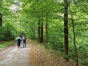 Wanderung auf dem Bärenbachtalweg