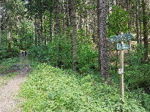 Waldweg in Richtung Olbernhau